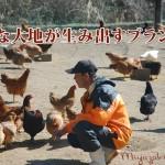 みやざき地頭鶏は大切に価値を高めていくブランド品